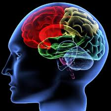 Neuroscience And Psychotherapy With Margaret Wilkinson (April 2016)