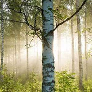 Energy-tree