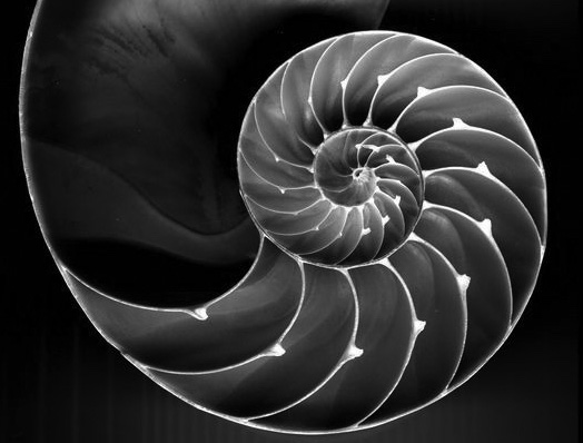 Shell Spiral Greyscale