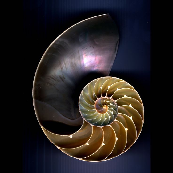 Nautilus Shell As Metaphor For Psychological Growth